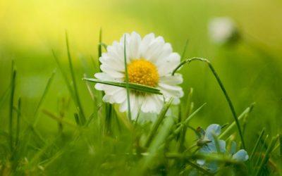 MP4: Blumenwiese zum Pusten