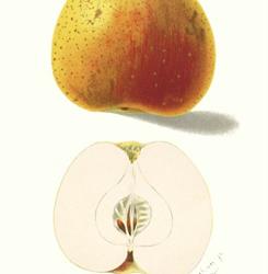 Im Portrait: Unsere heimischen Obstsorten