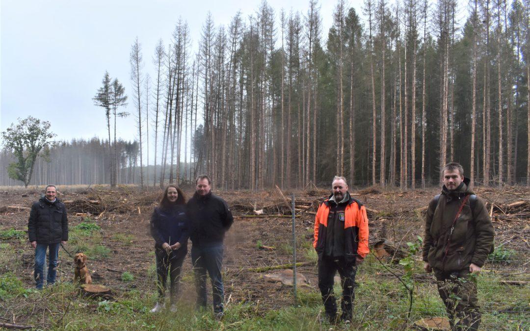Forstprojekt von Gemeinde und Unternehmen